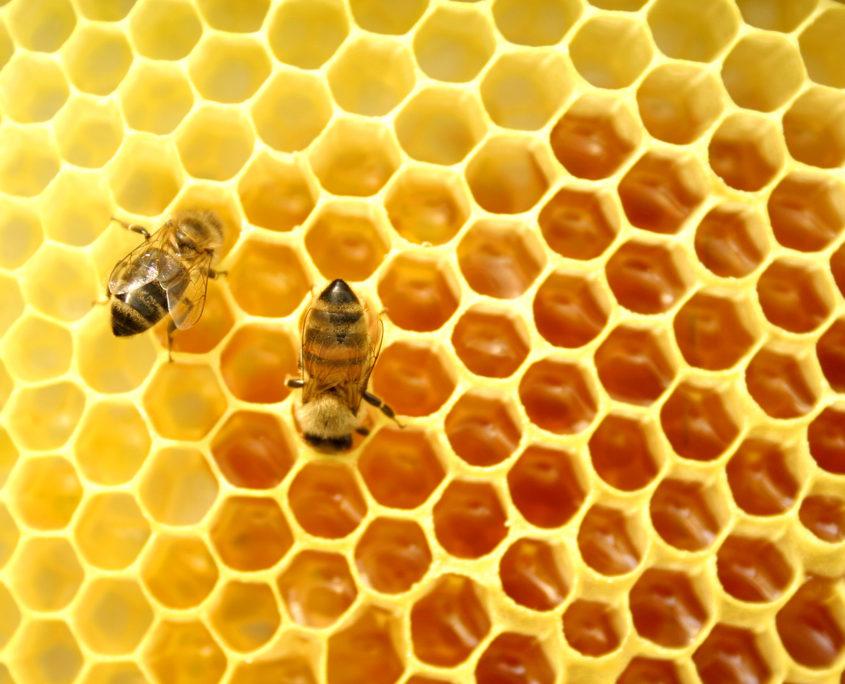 Bijen - honingraat